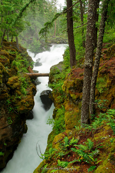 DF.2795 - Rogue River Gorge, Jackson County, OR.