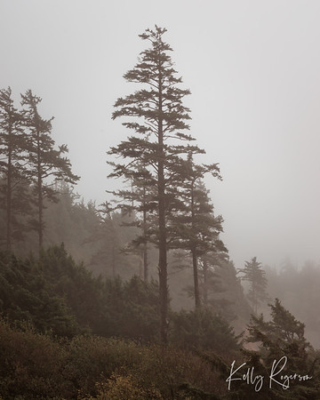 Foggy Day Among The Trees