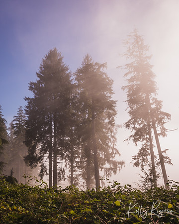 The fog dancing in the sunlight along a scenic drive in the beautiful forests of Oregon.