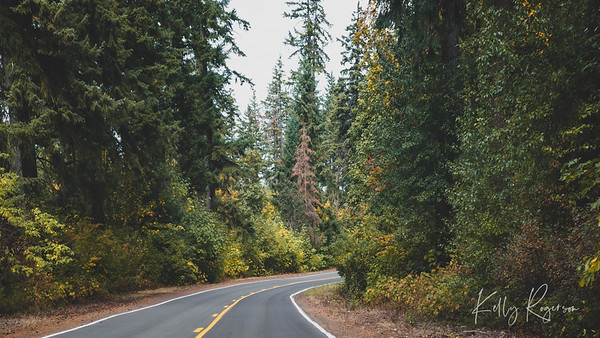 Drive Through Oregon Forest