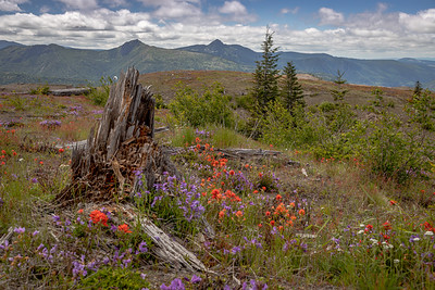 Mt St Helens from Johnston Ridge Observatory -16