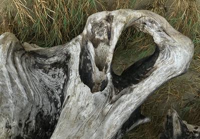 Driftwood, Nehalem Bay, 2020