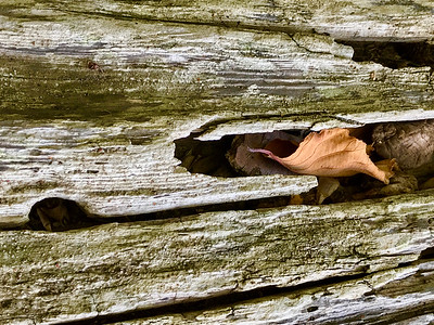 Driftwood & Leaf, San Juan Island, 2020