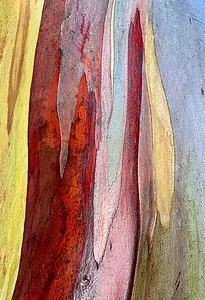 Eucalyptus in Rain, Portland, 2020