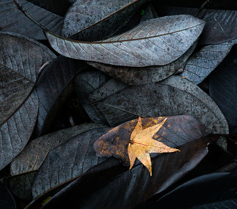 Magnolia Leaves, Maple Leaf, Portland, 2016