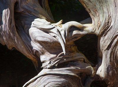 Driftwood, Nehalem, 2020