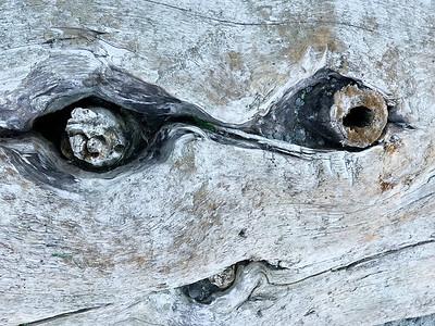 Driftwood Face, San Juan Island, 2020
