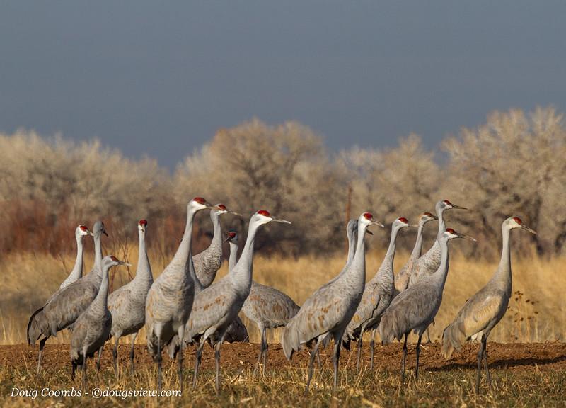 Ladd S. Gordon Wildlife Complex