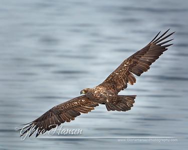 Eagle_GLO0119