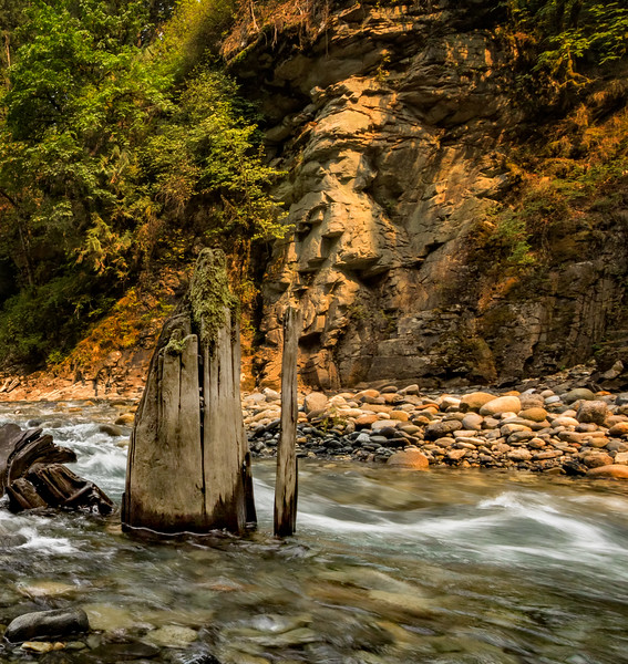A tree stump in the Coquihalla River near Hope, BC.