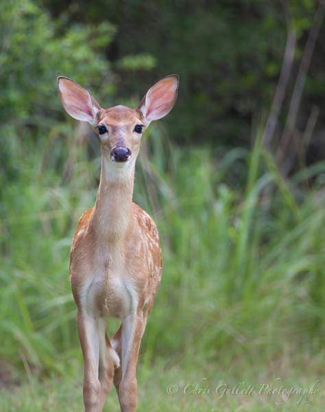 Doe...  A Deer