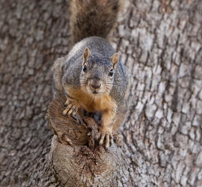 Feisty Squirrel