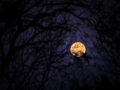 Full Moon Through the Live Oaks