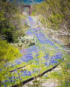 Bluebonnet Railroad with Bridge