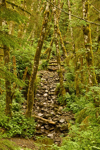Dry Creek in rain forest near Saddle Mountain State Park along US26 between Portland and the coast, Oregon.