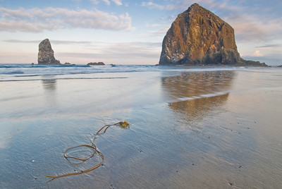 Kelp on the beach near Haystack Rock, Cannon Beach, Oregon.