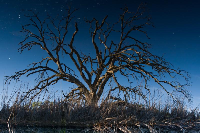 Tricky Tree