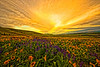 """Dalles Sunset""<br /> First Place<br /> Anne Strickland"