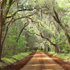 """Old South Pathway""<br /> Honorable Mention - Projected Images<br /> Ann Strickland"