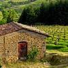 """Chianti Vineyard""<br /> Honorable Mention - Digital Projection<br /> Sherry Grunfeld"