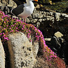 """""""Sea Gull""""<br /> 2nd Place - Color Prints<br /> Graham Bostick"""