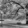 """A Stroll In The Park""<br /> Honorable Mention - Black & White Print<br /> D.J. Boyd"