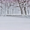 """Only Snow And Trees""<br /> Honorable Mention - Digital Projection<br /> Gary Ricketts"