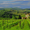 """Tuscany Vineyard""<br /> Honorable Mention - Digital Projection<br /> Charlie Stewart"