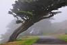 Windswept Cyprus