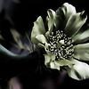 ET Flower