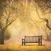 Resting Bench