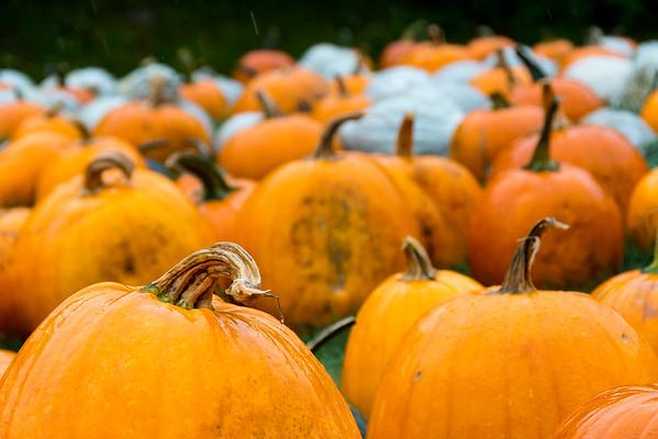 2015  New England Fall