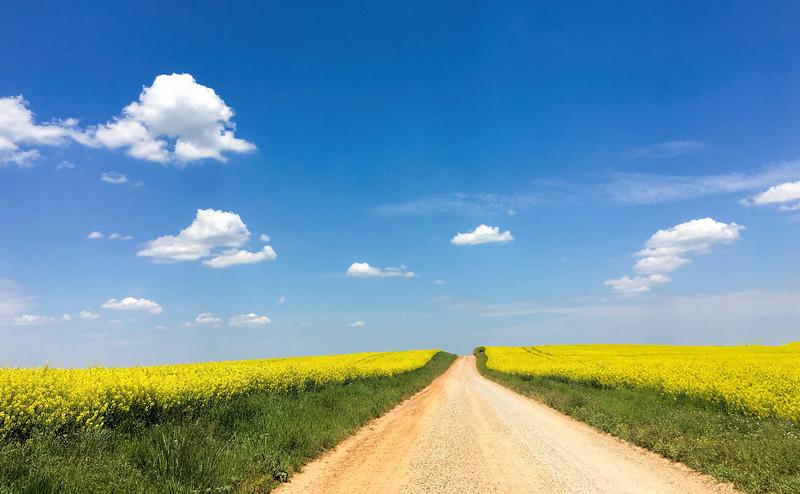 Canola Highway