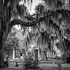 Old Live Oak Cemetery