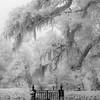 Natchez Garden