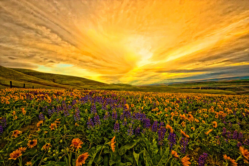 """""""Dalles Sunset""""<br /> First Place<br /> Anne Strickland"""