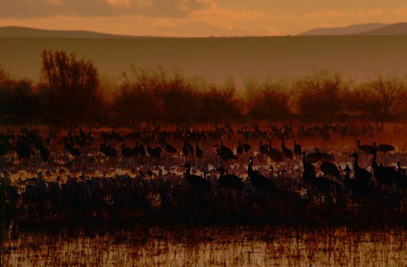 """Bosque Cranes""<br /> 1st Place - Projected Images<br /> Jeanne Connell"