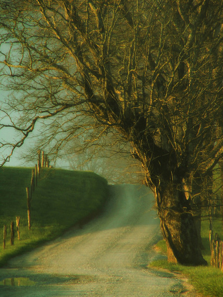 """""""Cove Road""""<br /> 2nd Place - Projected Images<br /> Jeanne Connell"""