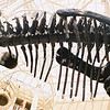 """Dino Skeleton""<br /> Honorable Mention - Digital Projection<br /> Robert Caldwell"