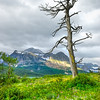 """Dead Tree At Many Glaciers""<br /> Honorable Mention - Projected Images<br /> Steve Grunfeld"