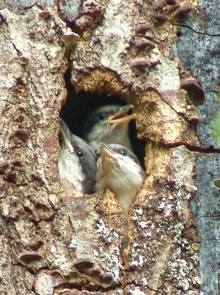 """""""My Baby Birds""""<br /> Zoie Zorn"""