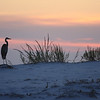 Perdido Heron<br /> Honorable Mention - Color Prints<br /> Penny Wegener