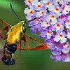 """Hummingbird Moth""<br /> Honorable Mention - Digital Projection<br /> Terry Yarbrough"