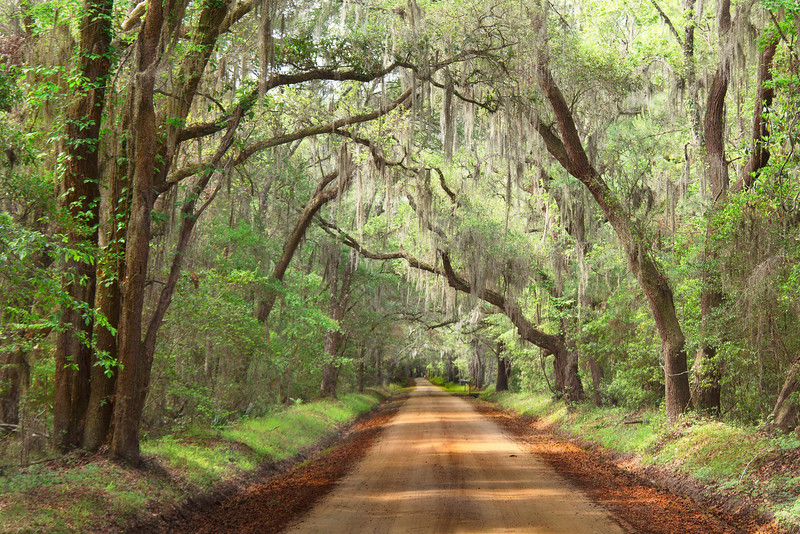 """""""Old South Pathway""""<br /> Honorable Mention - Projected Images<br /> Ann Strickland"""