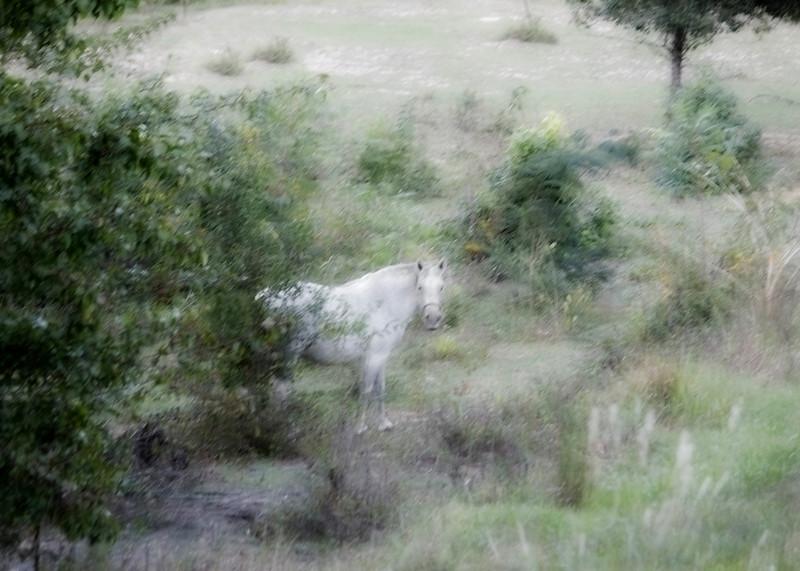"""Mystical Horse""<br /> 2nd Place - Alternative Prints<br /> DJ Boyd"