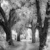 """Spanish Moss Trail""<br /> 1st Place - Black & White Prints<br /> Ken Boyd"