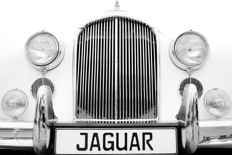 """""""JAG""""<br /> 3rd Place - Black & White Prints<br /> Ron Clemmons"""