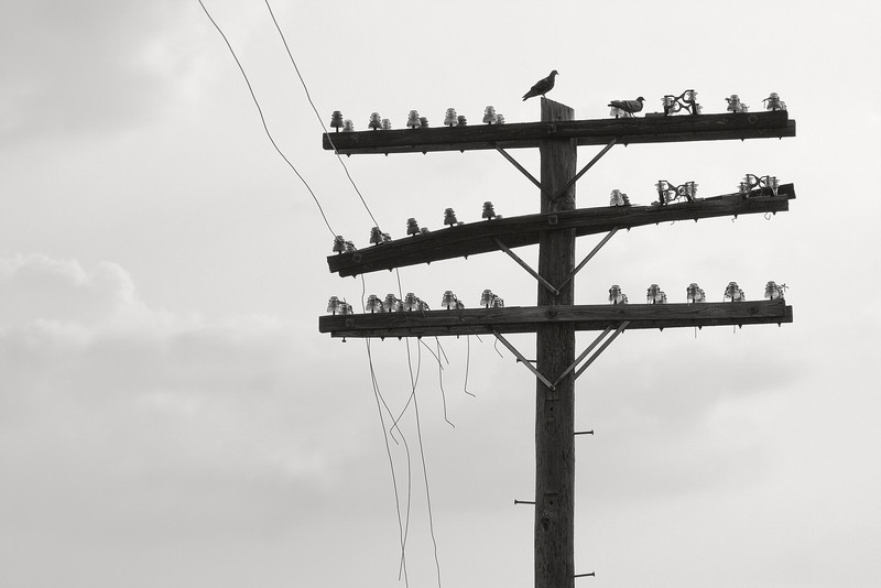 """Communication Breakdown""<br /> 1st Place - Black & White Prints<br /> Ron Clemmons"