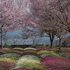"""Spring In Japan""<br /> Honorable Mention - Digital Projection<br /> Lavern Ramsey"