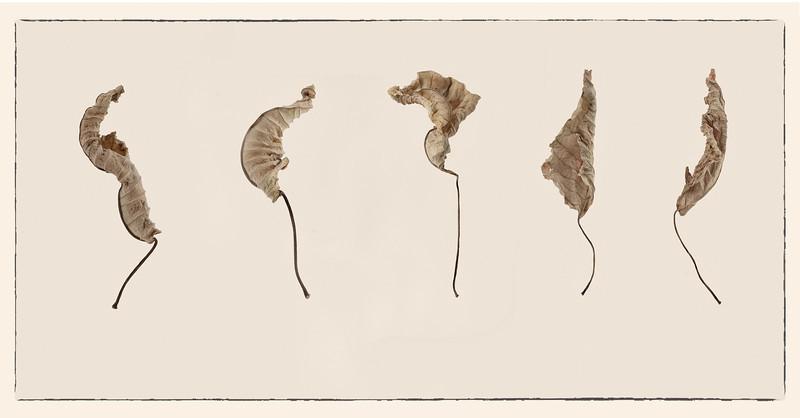 """Autumn Dance""<br /> 2nd Place - Alternative Prints<br /> Ken Boyd"